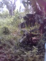 imagen031